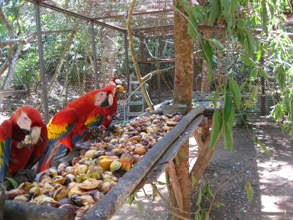 Macaw Conservation Program at The ARA Project